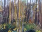Lužní les Brdy