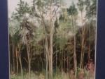 Okraj lesa u Nedrahovic